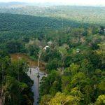Gagalnya Konservasi di Kawasan Hutan Harapan