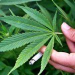 Perusahaan Tembakau Besar Lirik Ganja Sebagai Bagian dari Masa Depan Rokok