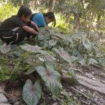 Kecil-Kecil Pemburu Keladi, Rama : Main Sambil Nambah Uang Jajan