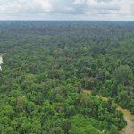 Chandra : Perusahaan Bertanggung Jawab Mengembalikan Status Hutan Harapan !