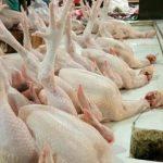 Pasokan Melimpah, Harga Ayam Potong di Palembang Turun Tajam