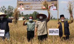Gubernur Sumsel dan Bupati Banyuasin Panen Raya di Desa Telang Jaya, Muara Telang